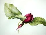 magnoliabud.jpg