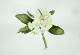 rhododendronmacabeanum2.jpg